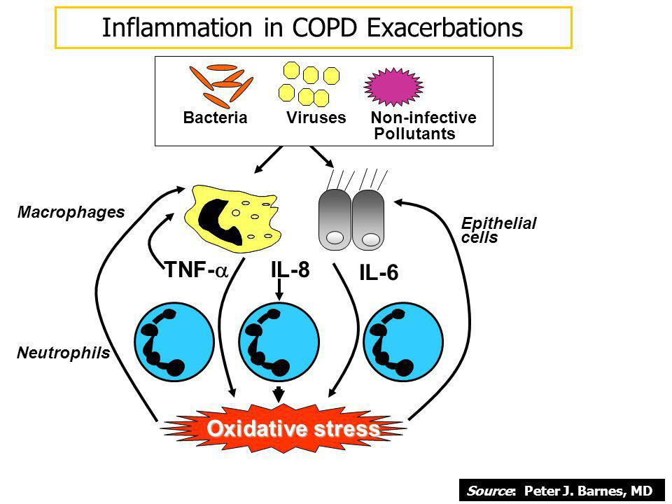 Macrophages TNF- IL-8 IL-6 Bacteria Viruses Non-infective Pollutants Epithelial cells Oxidative stress Neutrophils Inflammation in COPD Exacerbations
