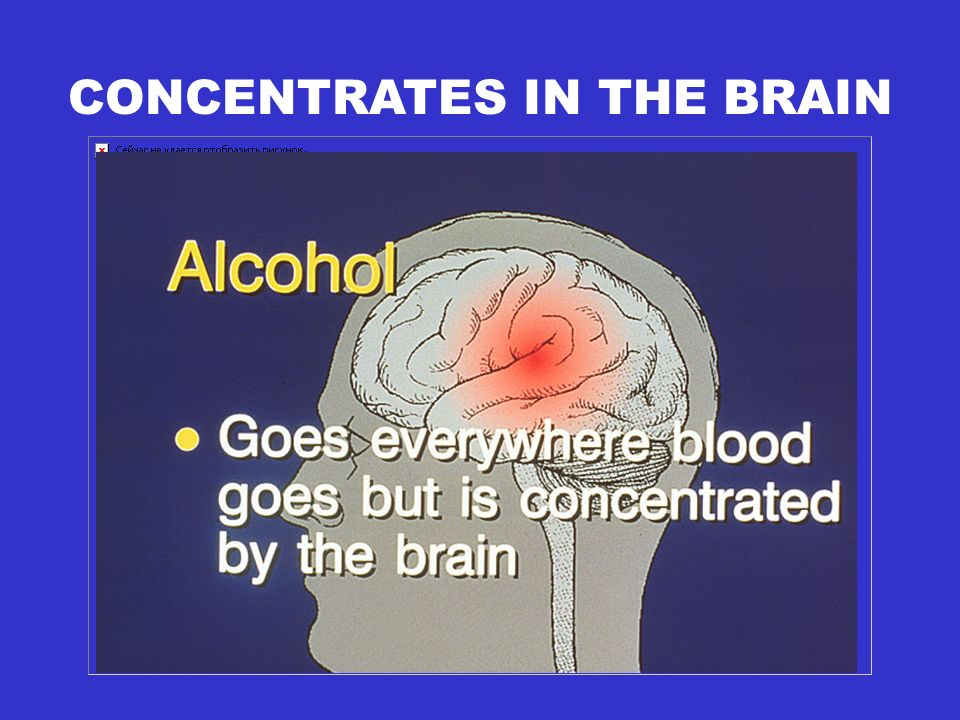 CONCENTRATES IN THE BRAIN