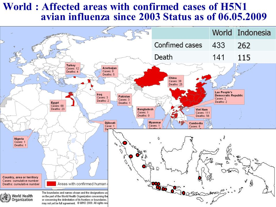 World : Affected areas with confirmed cases of H5N1 avian influenza since 2003 Status as of 06.05.2009WorldIndonesia Confimed cases 433262 Death 14111