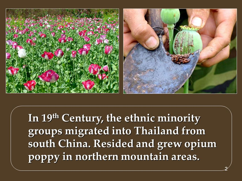 3 Thailand Northern Thailand In 76 Highland units of potential areas for opium poppy cultivation Covering 2 million hectares in 12 provinces Potential highland areas for opium cultivation CMI CRI MHS TAK PYA NAN LPG PRI PSL PCB KPP LEO