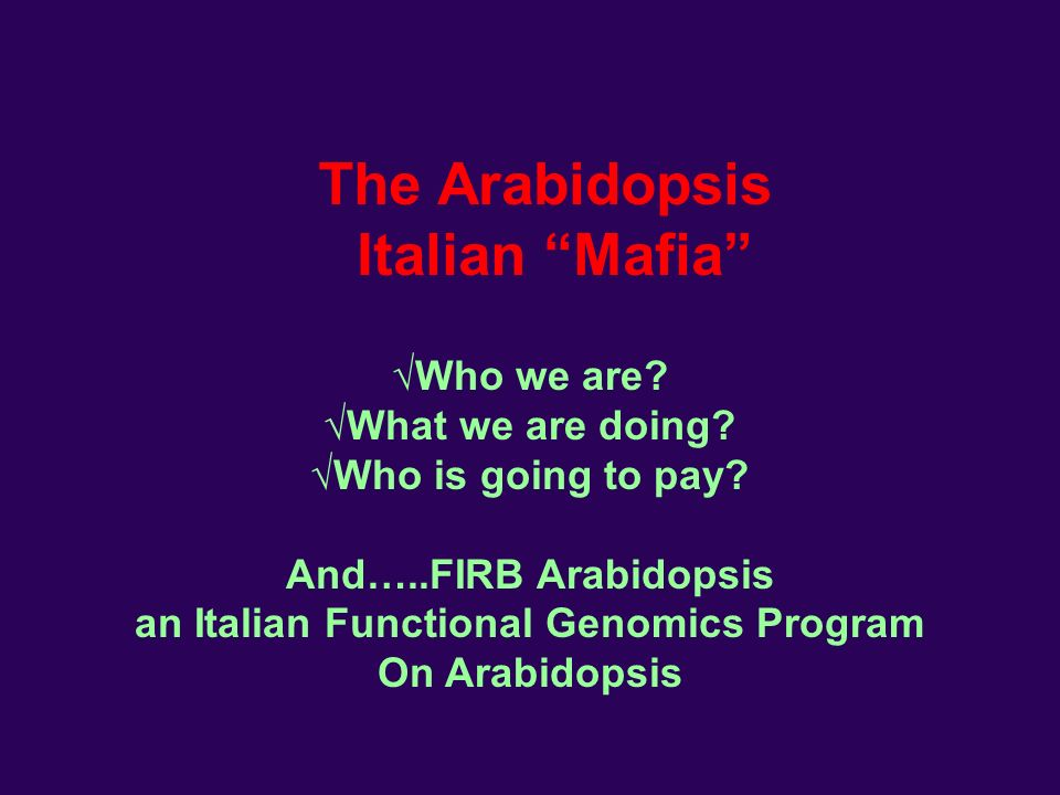 The Arabidopsis Italian Mafia Who we are. What we are doing.