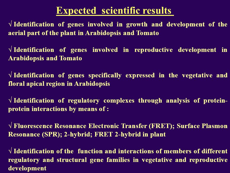 Expected scientific results Identification of genes involved in growth and development of the aerial part of the plant in Arabidopsis and Tomato Identification of genes involved in reproductive development in Arabidopsis and Tomato Identification of genes specifically expressed in the vegetative and floral apical region in Arabidopsis Identification of regulatory complexes through analysis of protein- protein interactions by means of : Fluorescence Resonance Electronic Transfer (FRET); Surface Plasmon Resonance (SPR); 2-hybrid; FRET 2-hybrid in plant Identification of the function and interactions of members of different regulatory and structural gene families in vegetative and reproductive development