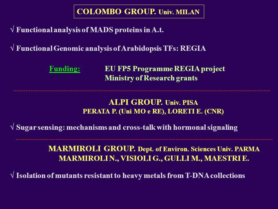ALPI GROUP. Univ. PISA PERATA P. (Uni MO e RE), LORETI E. (CNR) Sugar sensing: mechanisms and cross-talk with hormonal signaling COLOMBO GROUP. Univ.