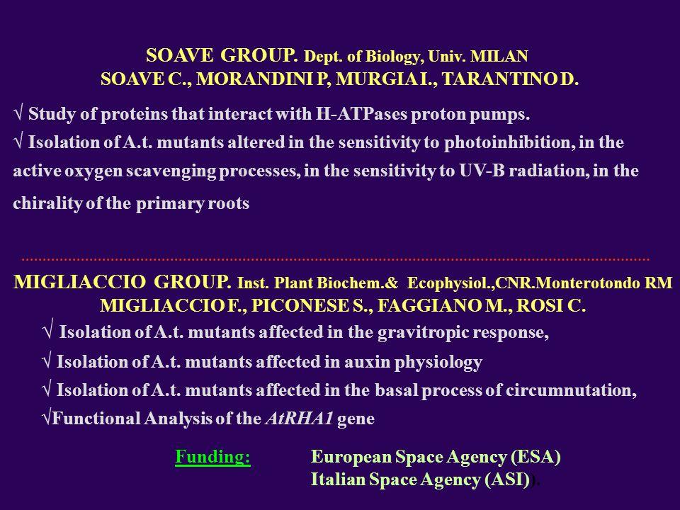 SOAVE GROUP. Dept. of Biology, Univ. MILAN SOAVE C., MORANDINI P, MURGIA I., TARANTINO D.