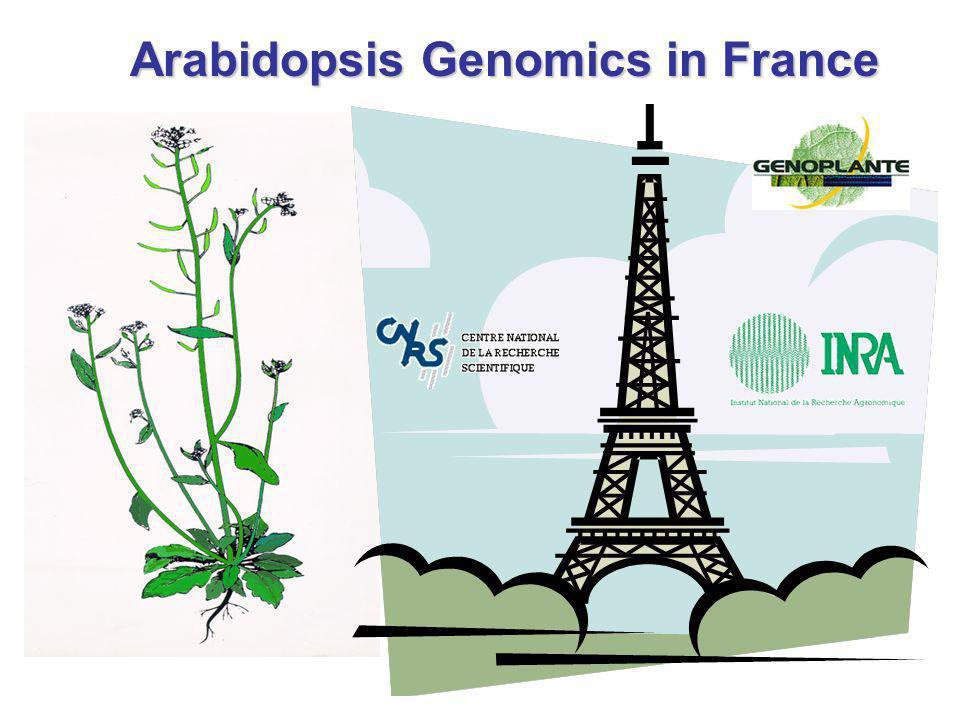 Arabidopsis Genomics in France
