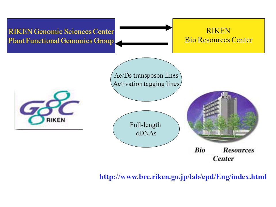 RIKEN Genomic Sciences Center Plant Functional Genomics Group Ac/Ds transposon lines Activation tagging lines Full-length cDNAs RIKEN Bio Resources Center http://www.brc.riken.go.jp/lab/epd/Eng/index.html