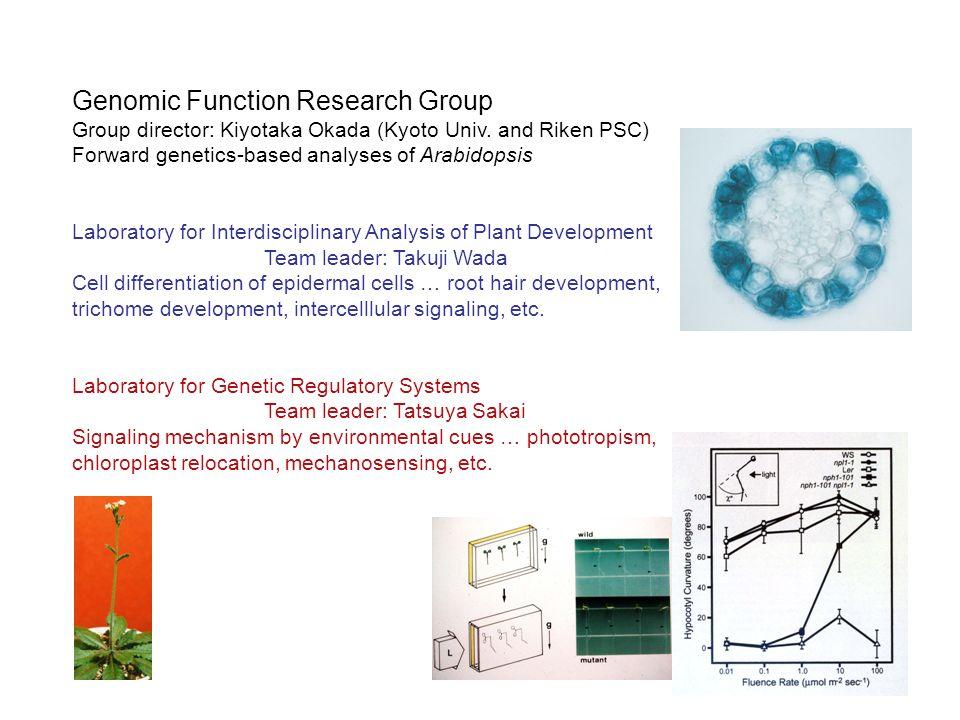 Genomic Function Research Group Group director: Kiyotaka Okada (Kyoto Univ.