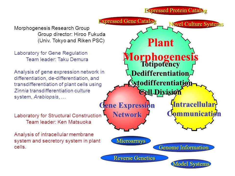 Novel Culture Systems Reverse Genetics PlantMorphogenesis Gene Expression Network IntracellularCommunication TotipotencyDedifferentiationCytodifferent