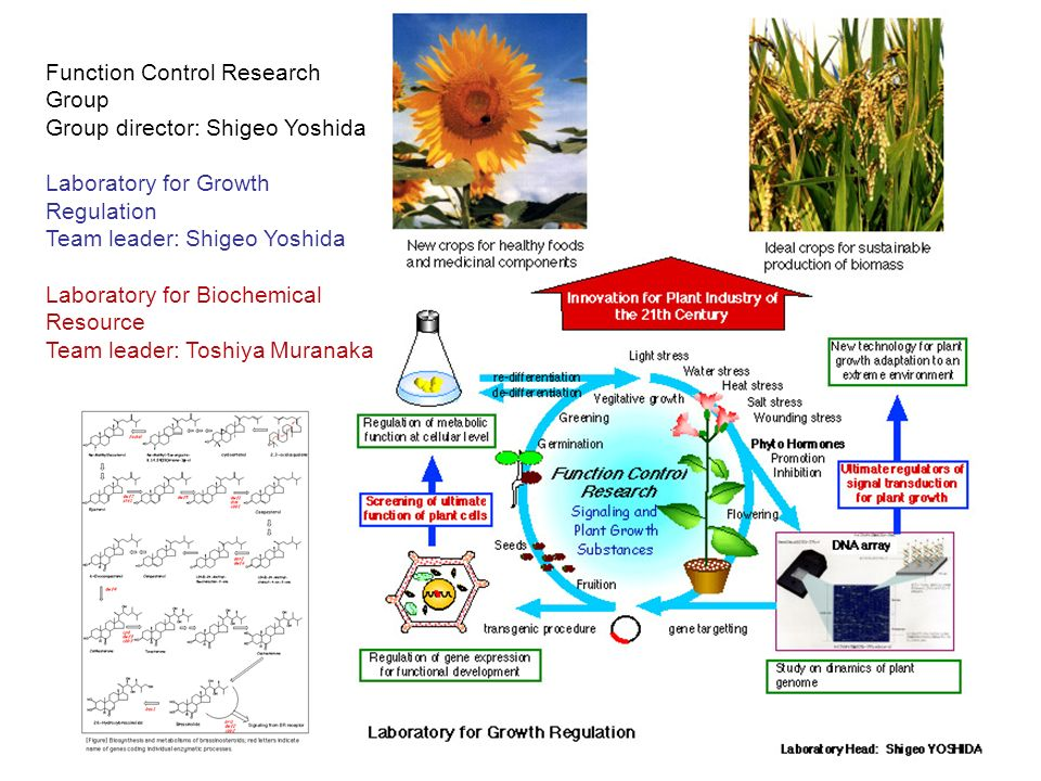 Function Control Research Group Group director: Shigeo Yoshida Laboratory for Growth Regulation Team leader: Shigeo Yoshida Laboratory for Biochemical Resource Team leader: Toshiya Muranaka
