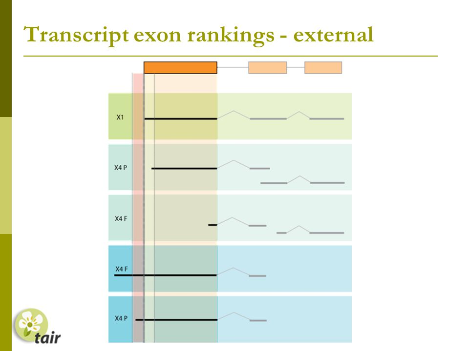 Transcript exon rankings - external