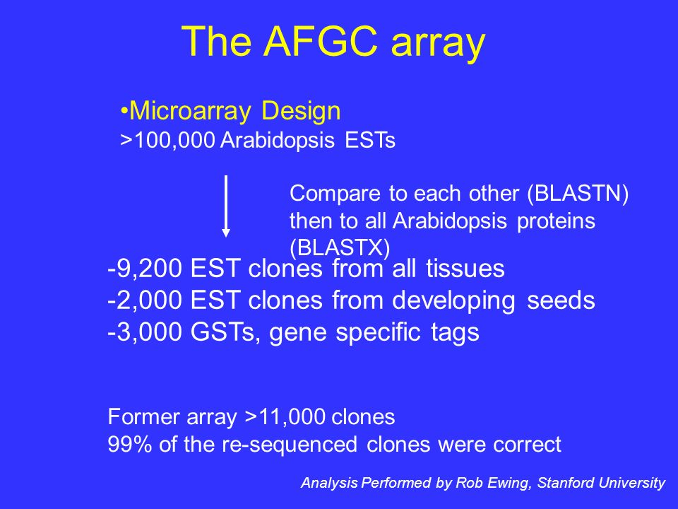 The AFGC array Microarray Design >100,000 Arabidopsis ESTs Compare to each other (BLASTN) then to all Arabidopsis proteins (BLASTX) Analysis Performed by Rob Ewing, Stanford University -9,200 EST clones from all tissues -2,000 EST clones from developing seeds -3,000 GSTs, gene specific tags Former array >11,000 clones 99% of the re-sequenced clones were correct