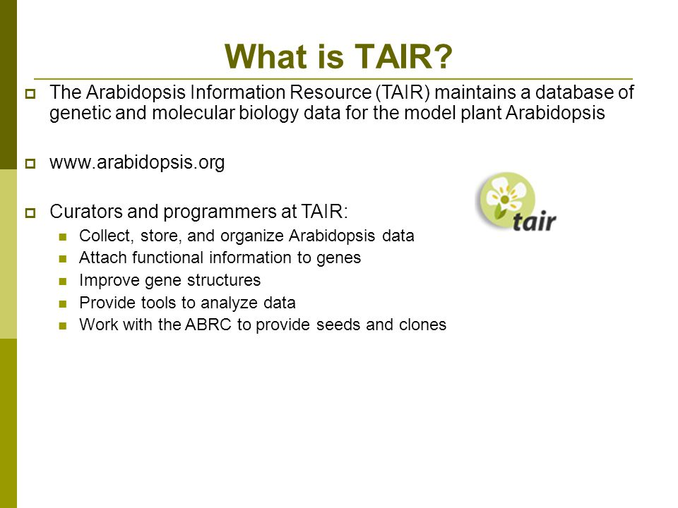 The Arabidopsis Information Resource (TAIR) maintains a database of genetic and molecular biology data for the model plant Arabidopsis www.arabidopsis.org Curators and programmers at TAIR: Collect, store, and organize Arabidopsis data Attach functional information to genes Improve gene structures Provide tools to analyze data Work with the ABRC to provide seeds and clones What is TAIR