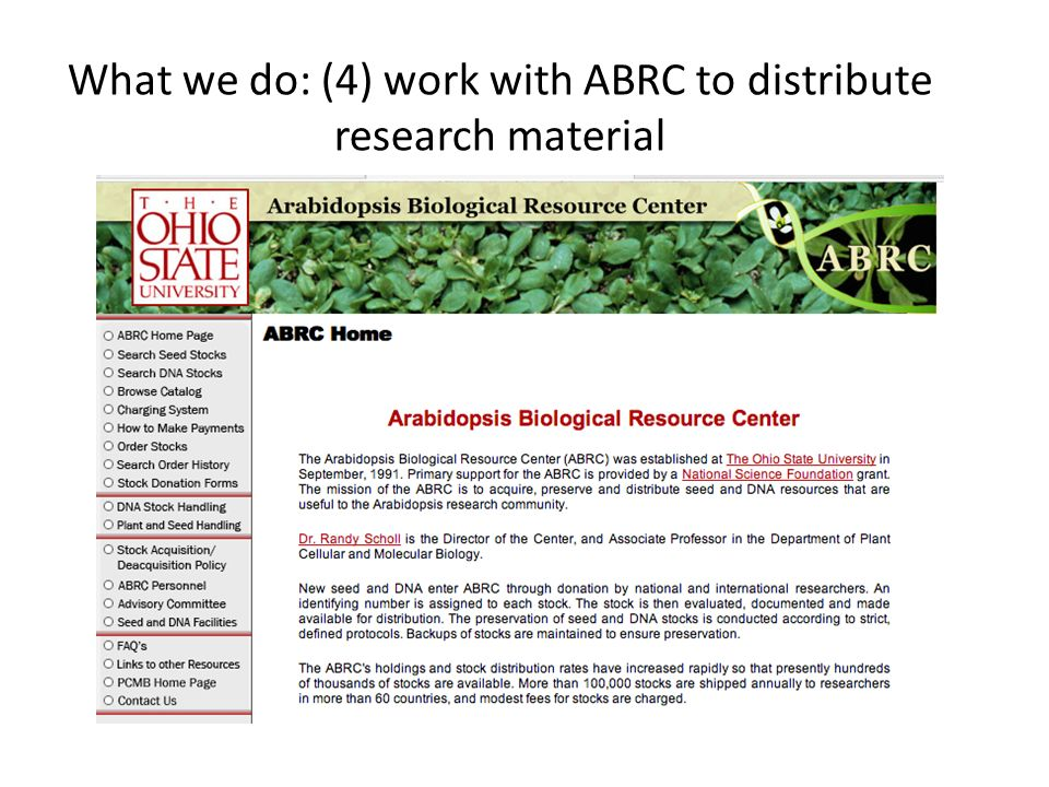 What we do: (4) work with ABRC to distribute research material