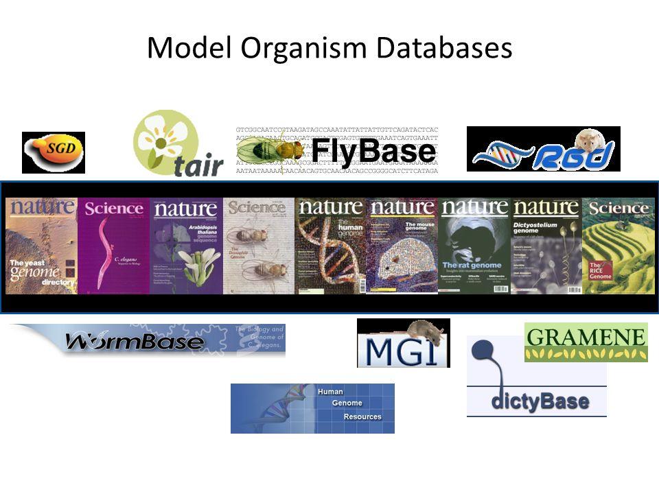 Model Organism Databases