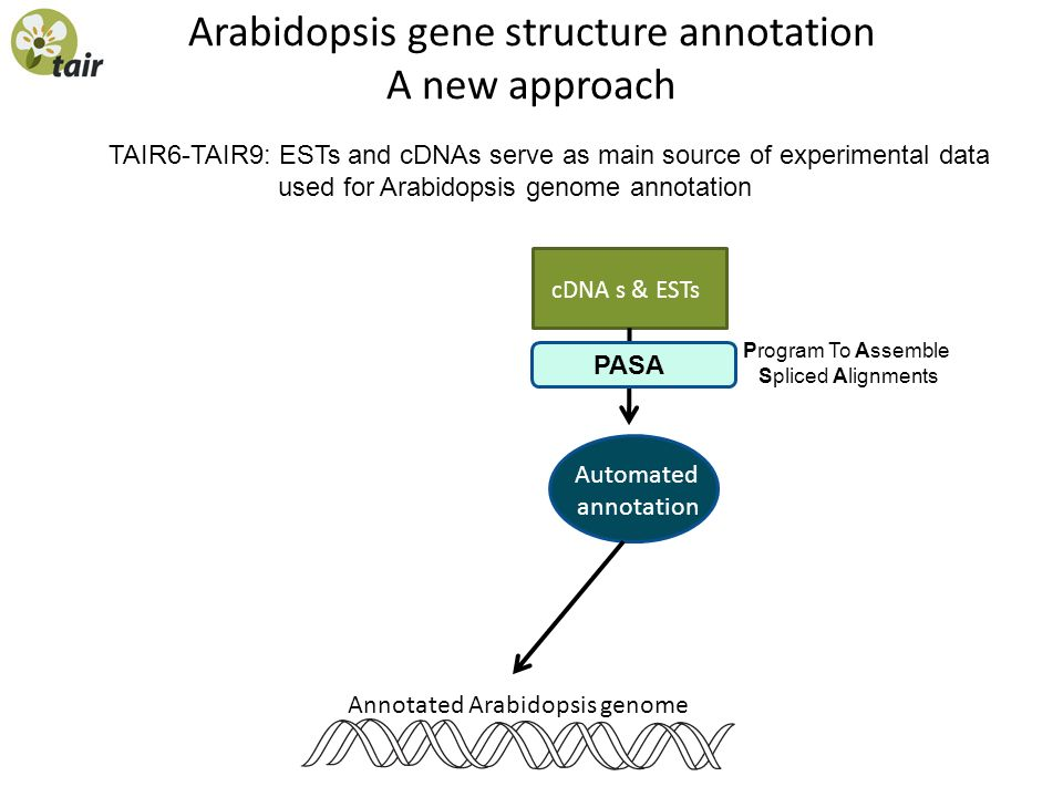 Arabidopsis gene structure annotation A new approach TAIR6-TAIR9: ESTs and cDNAs serve as main source of experimental data used for Arabidopsis genome
