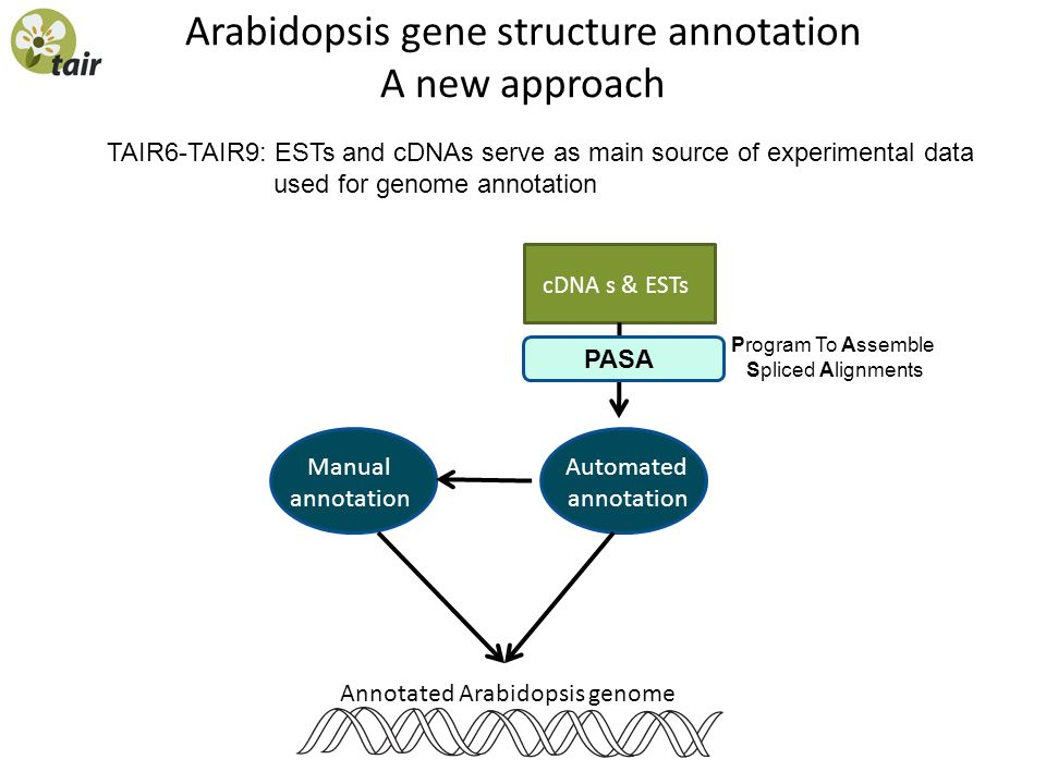 Arabidopsis gene structure annotation A new approach TAIR6-TAIR9: ESTs and cDNAs serve as main source of experimental data used for genome annotation