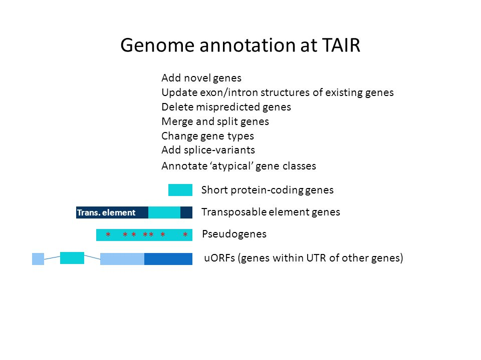 Genome annotation at TAIR Annotate atypical gene classes * * * ** * * Trans.