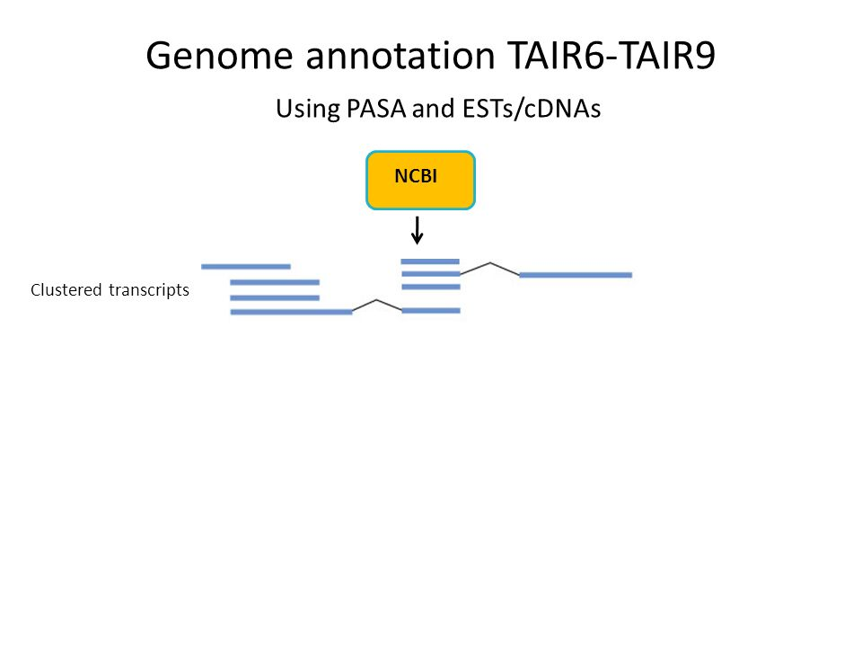 Using PASA and ESTs/cDNAs Clustered transcripts NCBI Genome annotation TAIR6-TAIR9