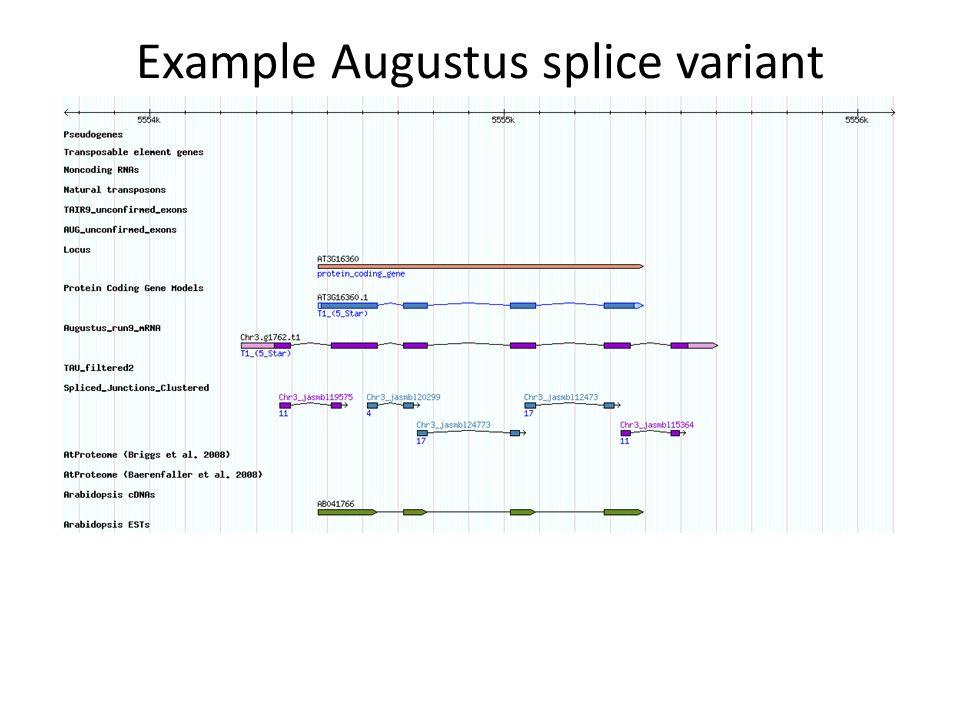 Example Augustus splice variant