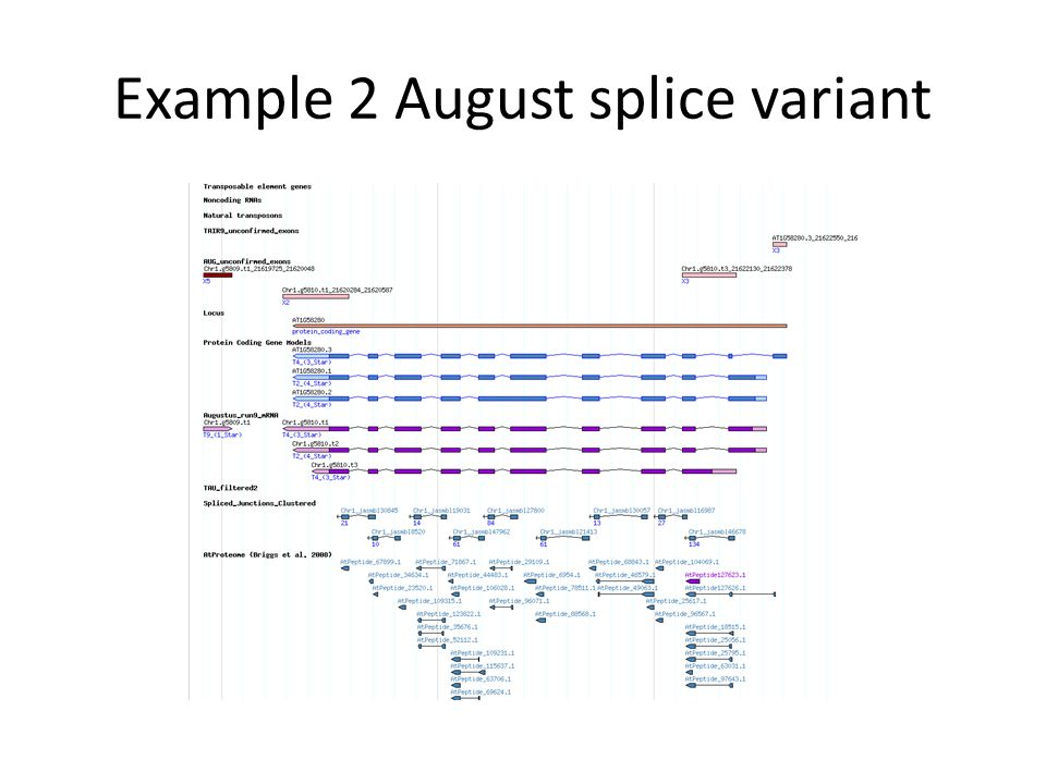Example 2 August splice variant