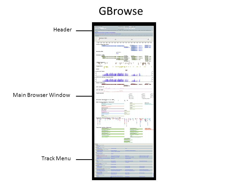 GBrowse Header Main Browser Window Track Menu