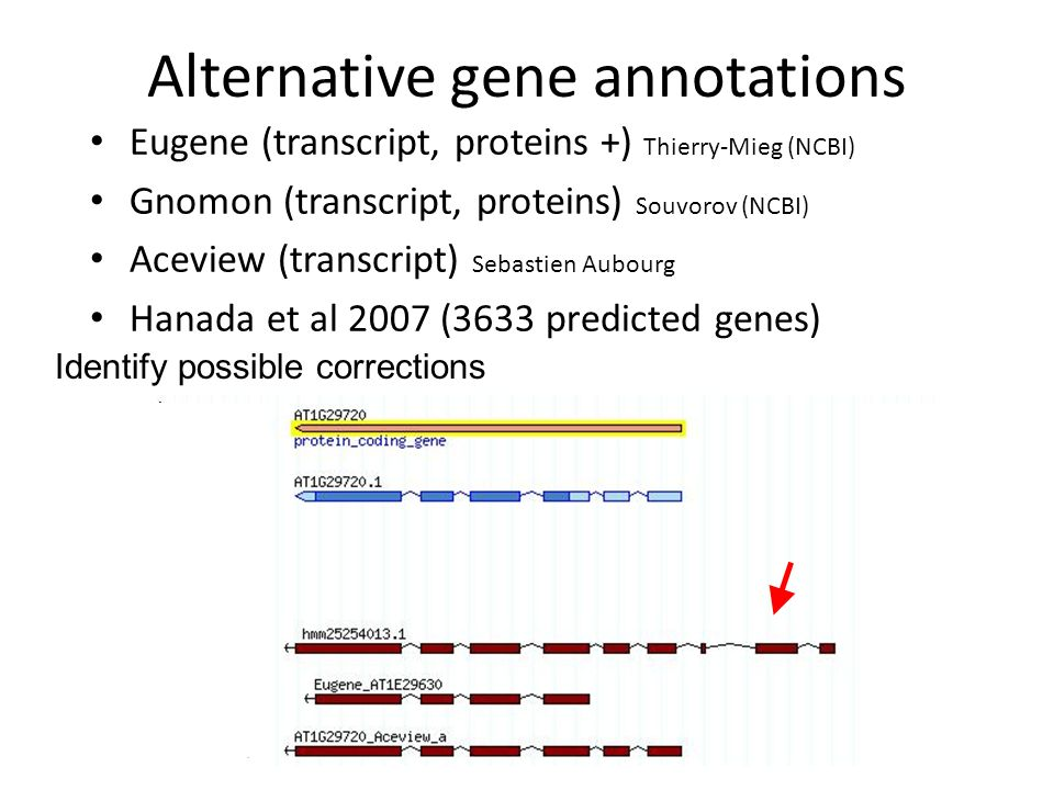 Alternative gene annotations Eugene (transcript, proteins +) Thierry-Mieg (NCBI) Gnomon (transcript, proteins) Souvorov (NCBI) Aceview (transcript) Sebastien Aubourg Hanada et al 2007 (3633 predicted genes) Identify possible corrections