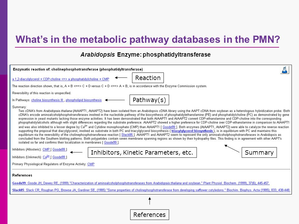 Whats in the metabolic pathway databases in the PMN? Reaction Pathway(s) Summary References Inhibitors, Kinetic Parameters, etc. Arabidopsis Enzyme: p