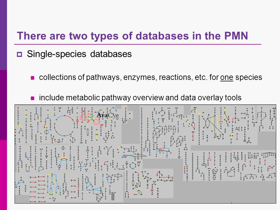 There are two types of databases in the PMN Single-species databases collections of pathways, enzymes, reactions, etc.