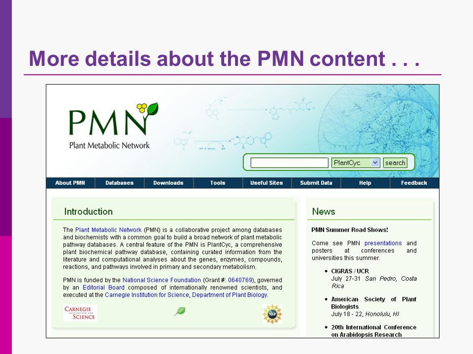 More details about the PMN content...