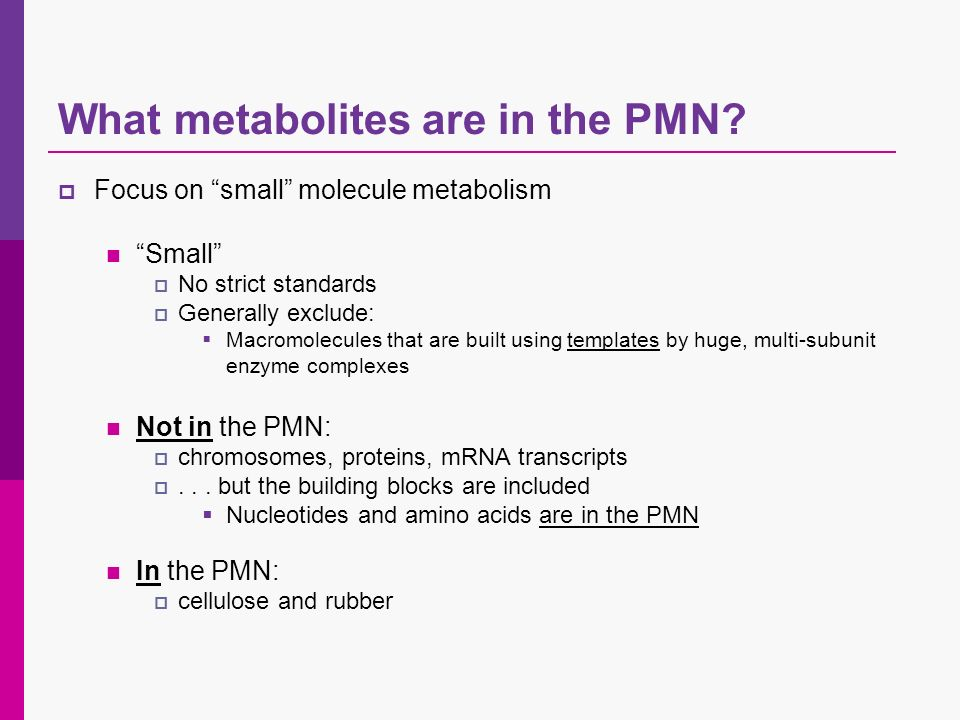What metabolites are in the PMN.