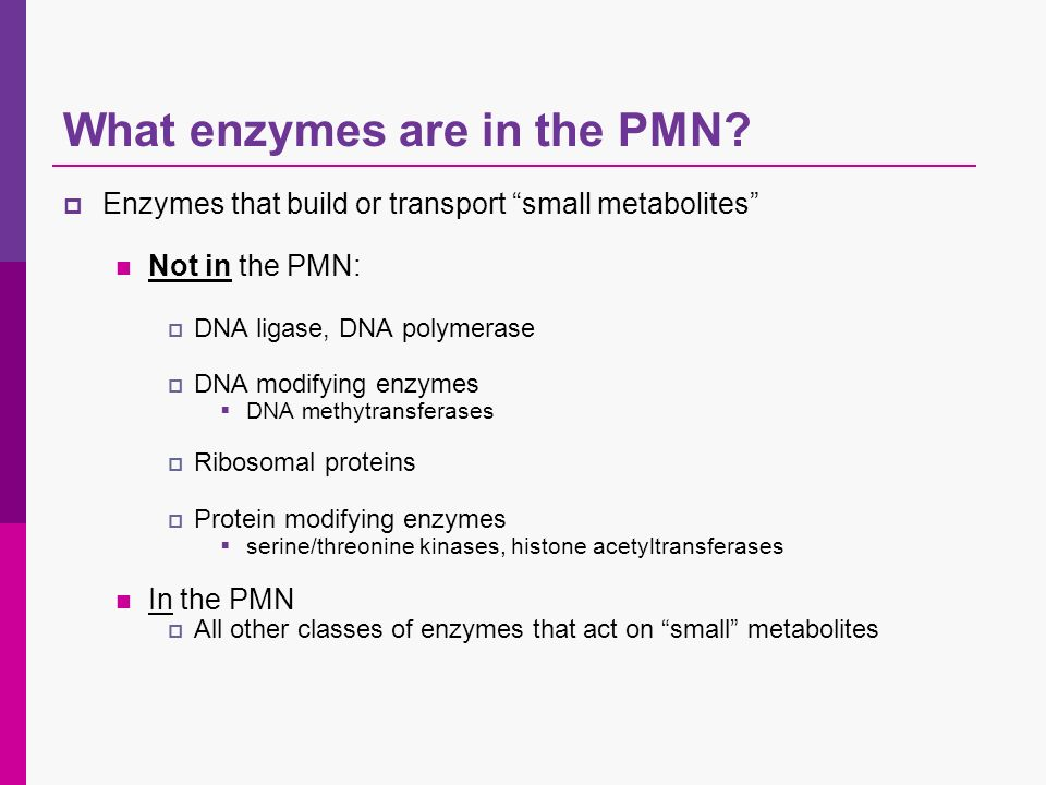 What enzymes are in the PMN? Enzymes that build or transport small metabolites Not in the PMN: DNA ligase, DNA polymerase DNA modifying enzymes DNA me