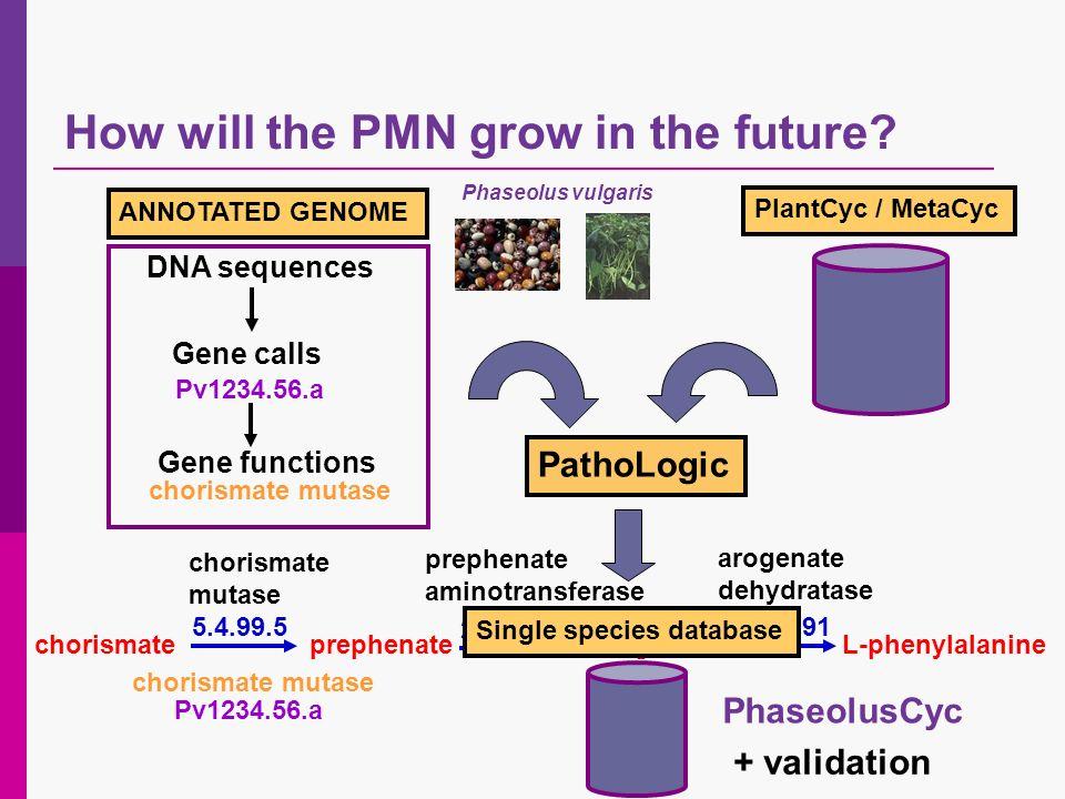 PathoLogic ANNOTATED GENOME Pv1234.56.a chorismate mutase prephenate aminotransferase arogenate dehydratase chorismateprephenateL-arogenateL-phenylala