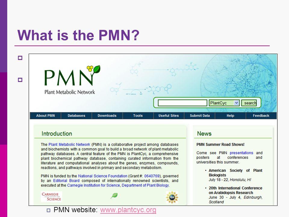 What is the PMN.
