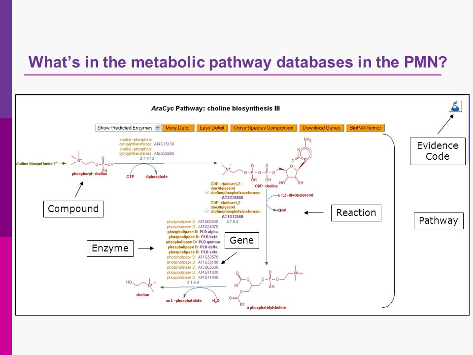 Pathway Enzyme Gene Reaction Compound Evidence Code Whats in the metabolic pathway databases in the PMN?