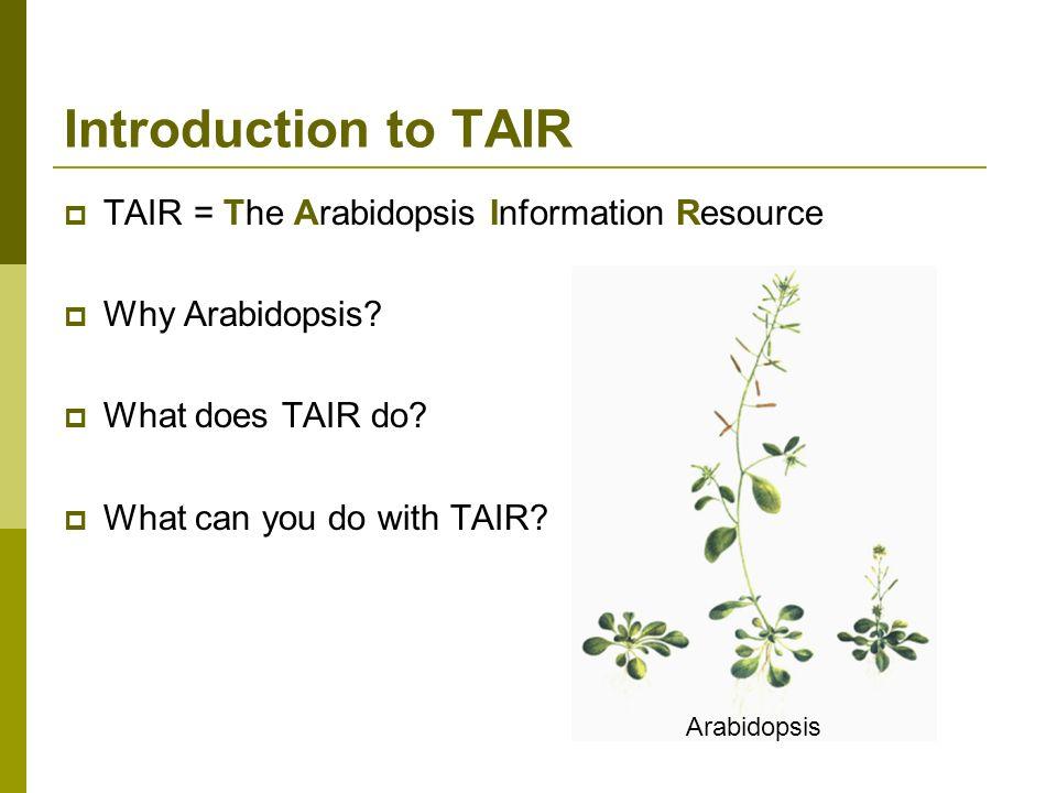 TAIR = The Arabidopsis Information Resource Why Arabidopsis.