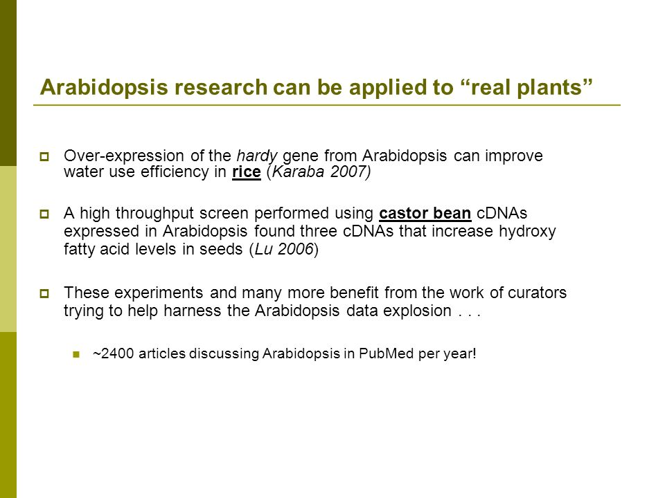 Arabidopsis research can be applied to real plants Over-expression of the hardy gene from Arabidopsis can improve water use efficiency in rice (Karaba 2007) A high throughput screen performed using castor bean cDNAs expressed in Arabidopsis found three cDNAs that increase hydroxy fatty acid levels in seeds (Lu 2006) These experiments and many more benefit from the work of curators trying to help harness the Arabidopsis data explosion...