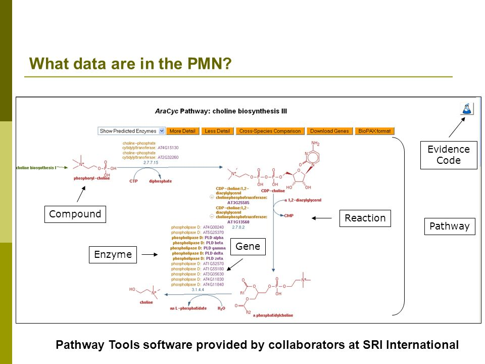 Pathway Enzyme Gene Reaction Compound Evidence Code What data are in the PMN? Pathway Tools software provided by collaborators at SRI International