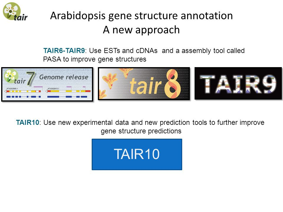 Arabidopsis gene structure annotation A new approach TAIR6-TAIR9: Use ESTs and cDNAs and a assembly tool called PASA to improve gene structures TAIR10 TAIR10: Use new experimental data and new prediction tools to further improve gene structure predictions