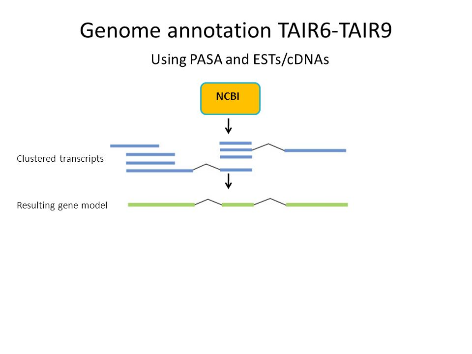 Clustered transcripts Resulting gene model NCBI Using PASA and ESTs/cDNAs Genome annotation TAIR6-TAIR9