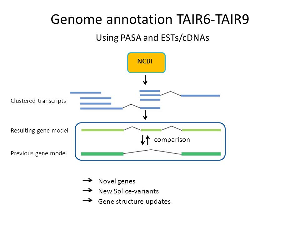 Clustered transcripts Resulting gene model Previous gene model NCBI comparison Novel genes New Splice-variants Gene structure updates Using PASA and ESTs/cDNAs Genome annotation TAIR6-TAIR9