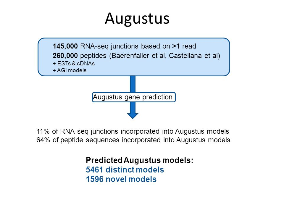 Augustus 145,000 RNA-seq junctions based on >1 read 260,000 peptides (Baerenfaller et al, Castellana et al) Augustus gene prediction + ESTs & cDNAs + AGI models 11% of RNA-seq junctions incorporated into Augustus models 64% of peptide sequences incorporated into Augustus models Predicted Augustus models: 5461 distinct models 1596 novel models