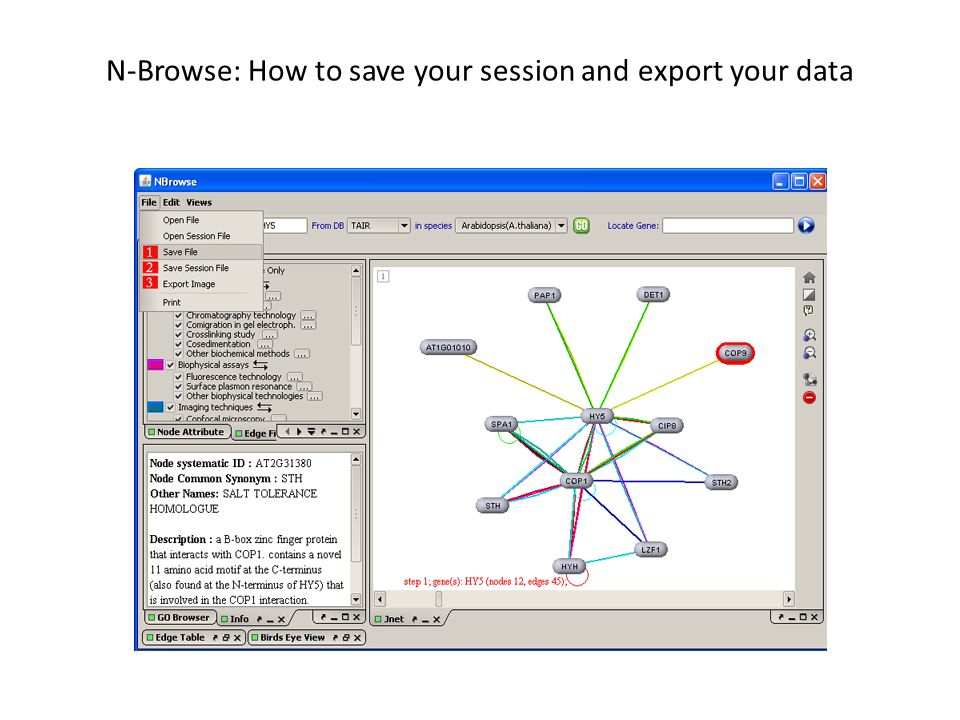 N-Browse: How to save your session and export your data