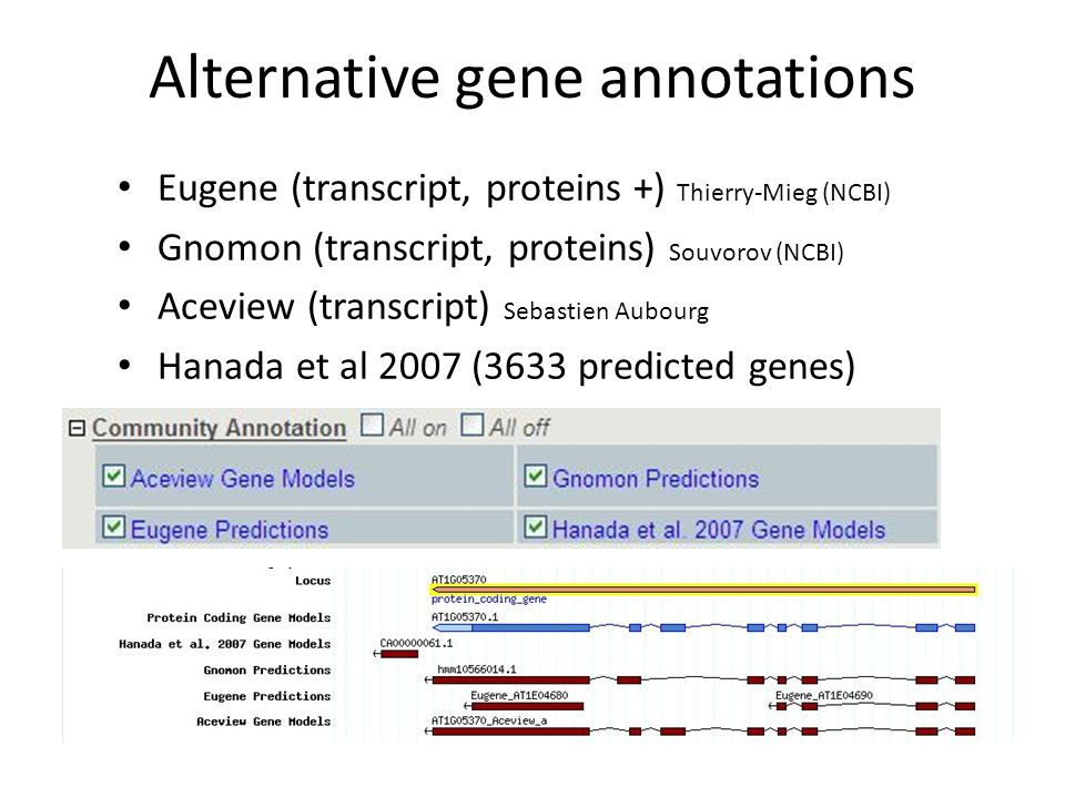 Alternative gene annotations Eugene (transcript, proteins +) Thierry-Mieg (NCBI) Gnomon (transcript, proteins) Souvorov (NCBI) Aceview (transcript) Sebastien Aubourg Hanada et al 2007 (3633 predicted genes)