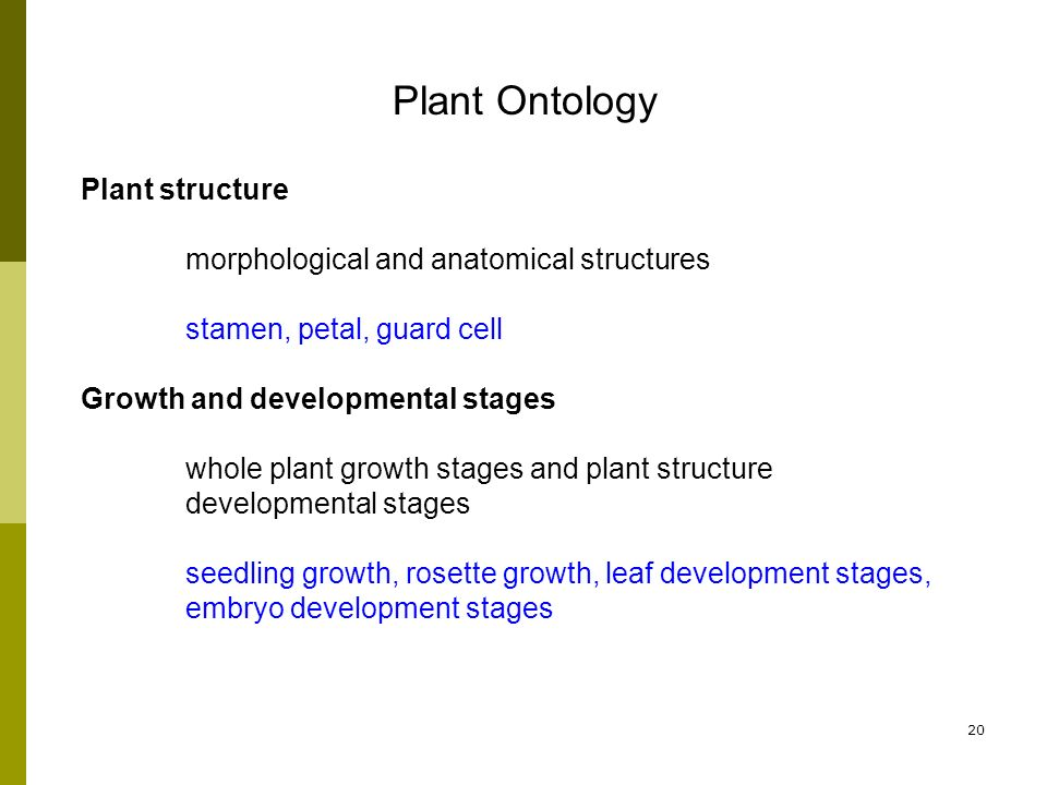 20 Plant structure morphological and anatomical structures stamen, petal, guard cell Growth and developmental stages whole plant growth stages and plant structure developmental stages seedling growth, rosette growth, leaf development stages, embryo development stages Plant Ontology