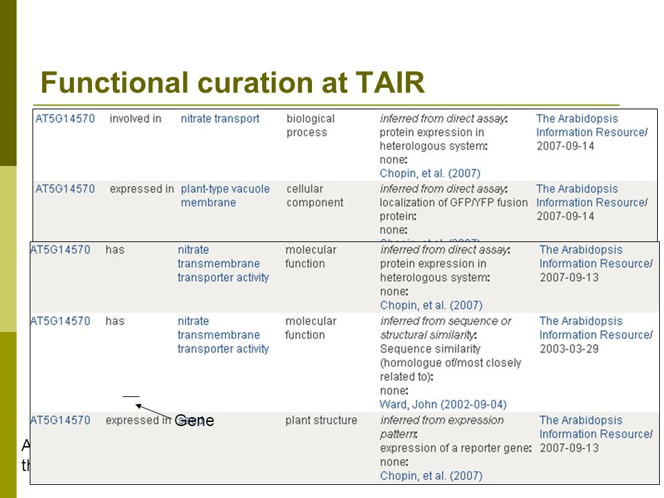 Functional curation at TAIR Functional curators use controlled vocabularies to annotate genes Molecular function Subcellular localization Biological process Expression pattern Development stage Tissue / organ / cell type Gene Enter common name, e.g.