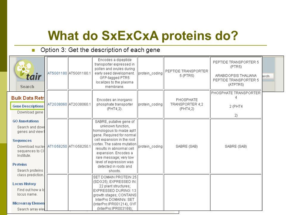 What do SxExCxA proteins do? Option 3: Get the description of each gene