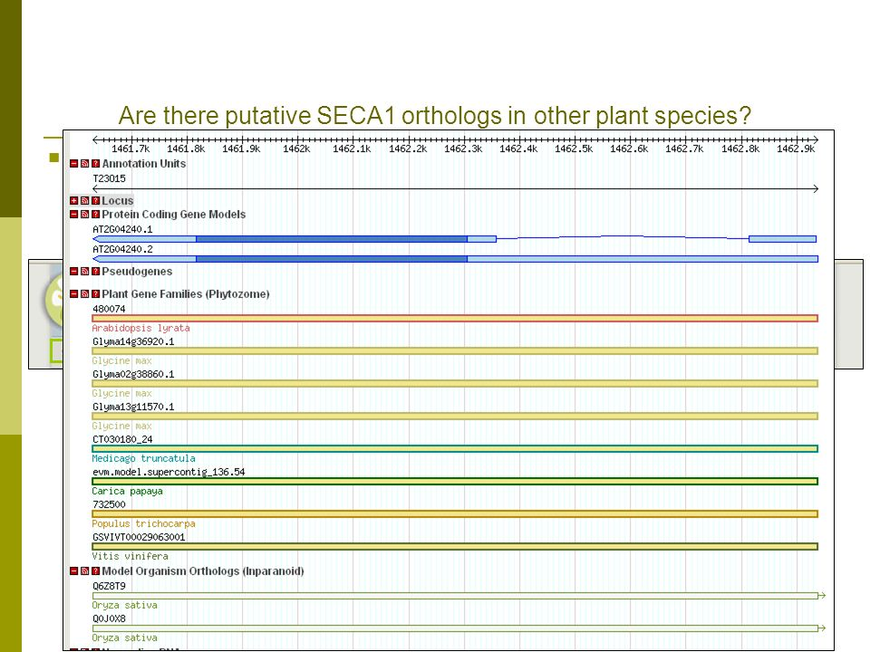Are there putative SECA1 orthologs in other plant species.