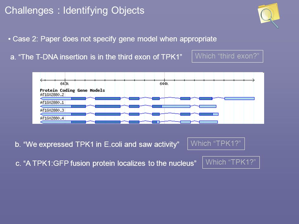 Challenges : Identifying Objects Case 2: Paper does not specify gene model when appropriate a. The T-DNA insertion is in the third exon of TPK1 Which