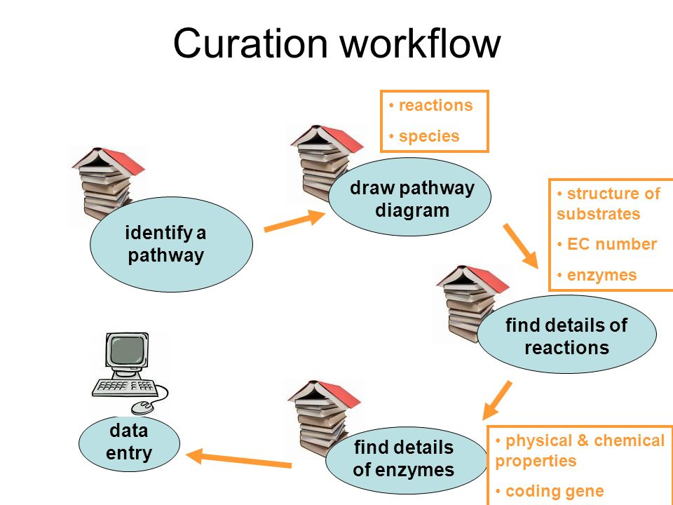 Curation workflow identify a pathway find details of reactions find details of enzymes data entry structure of substrates EC number enzymes physical & chemical properties coding gene reactions species draw pathway diagram