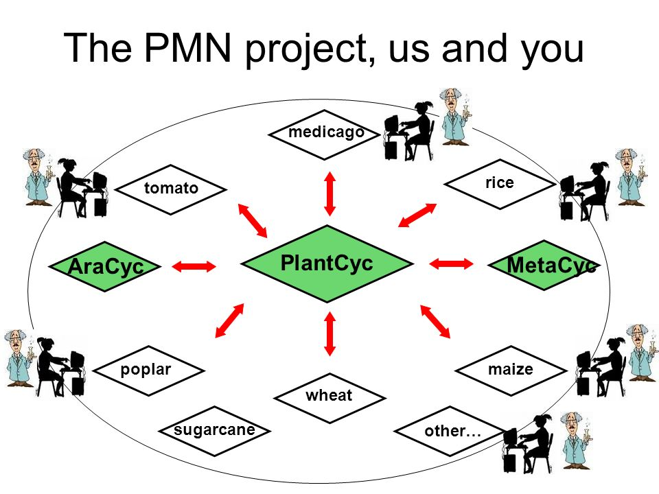 The PMN project, us and you PlantCyc poplar wheat maize AraCyc tomato rice medicago sugarcane other… MetaCyc